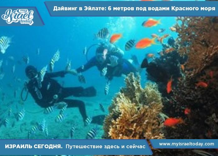 Дайвинг-в-Эйлате-6-метров-под-водами-Красного-моря