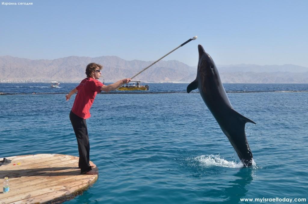 Дельфин выполняет трюки