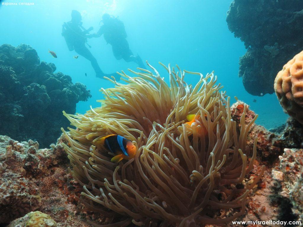 подводное погружение в красное море