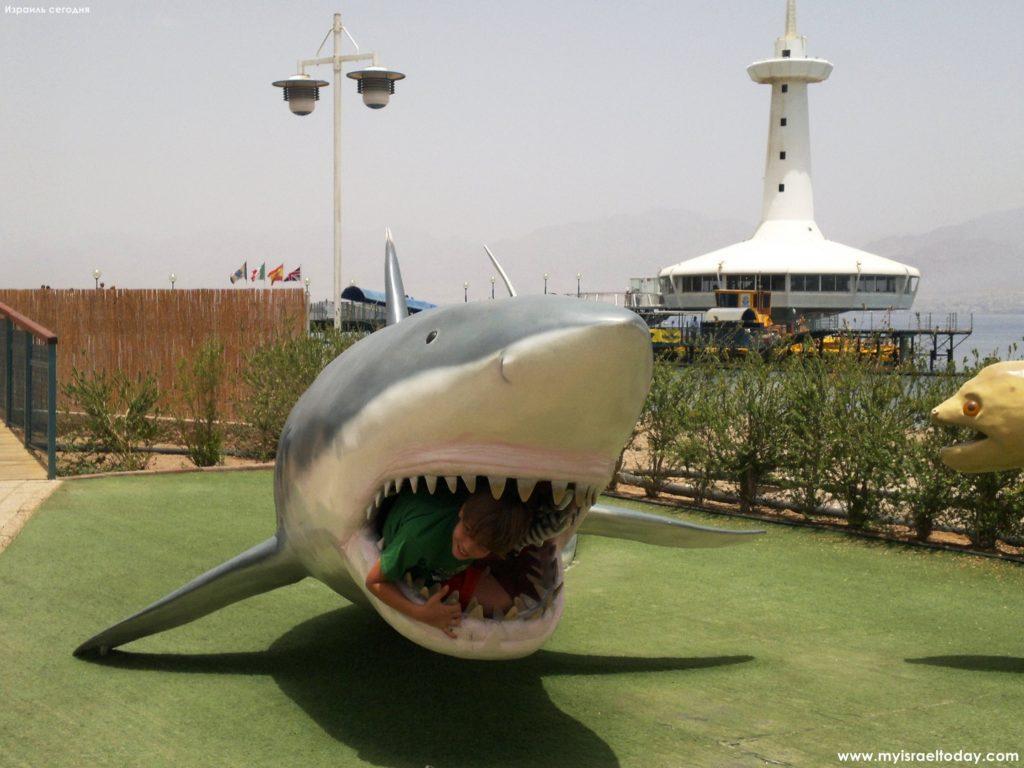 акула, подводная обсерватория, эйлат