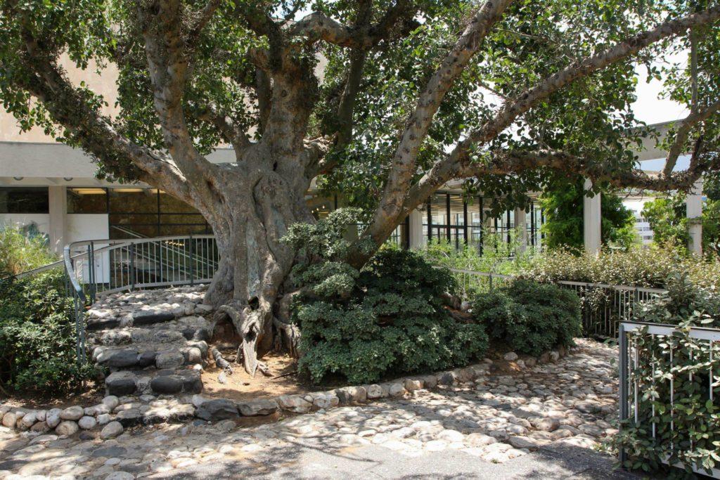 парк Яакова Тель-Авив