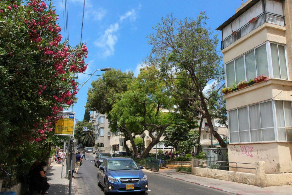 Олеандр Тель-Авив