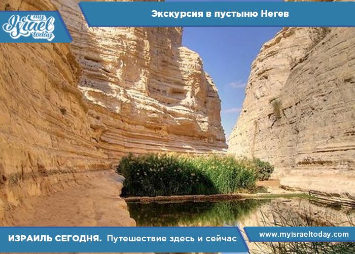 экскурсия в пустыню негев