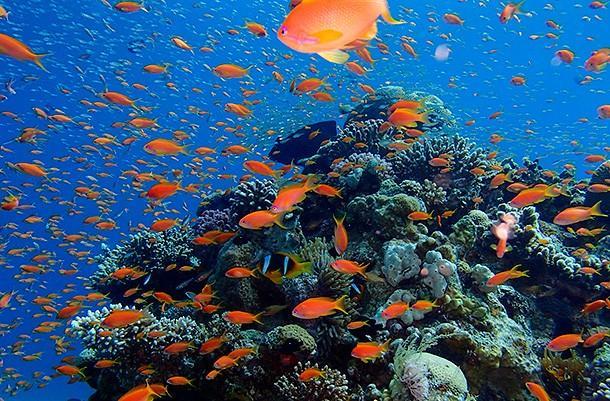 Чем заняться в Эйлате. Коралловый риф