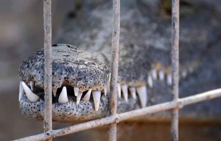 Чем заняться в Эйлате. Крокодилья ферма Crocoloco