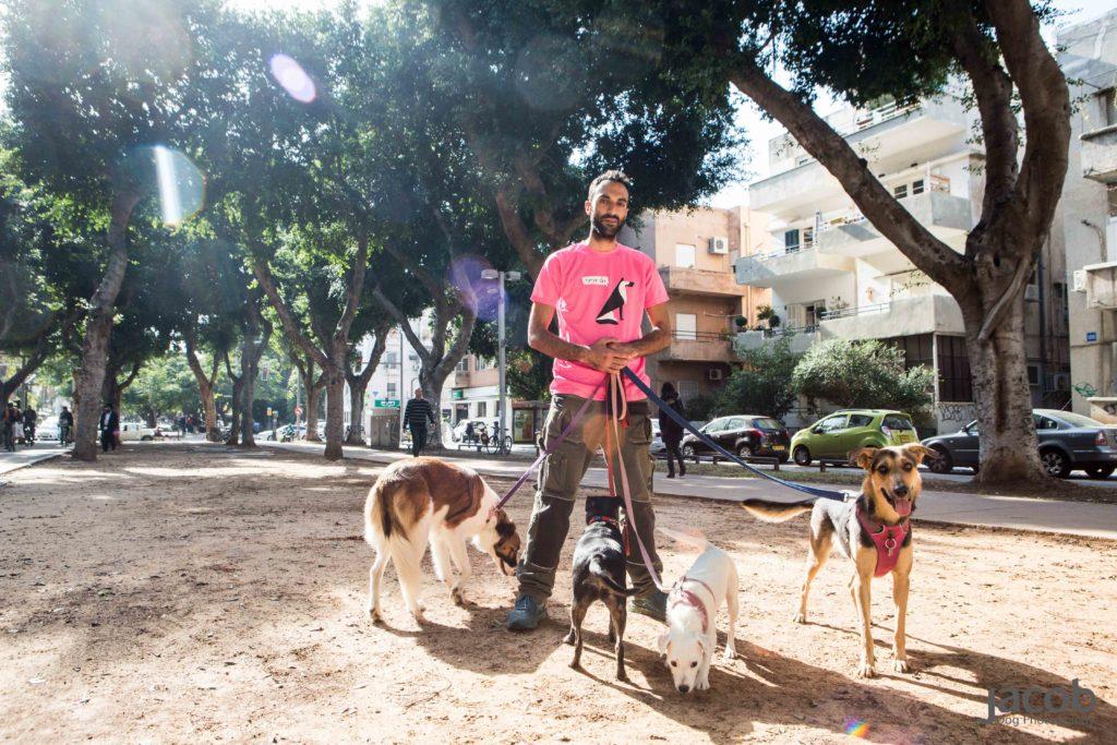 Собаки в Тель-Авиве